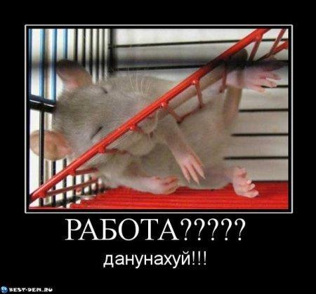 http://www.anekdotov-mnogo.ru/image-prikol/smeshnie_kartinki_133726805817052012.jpg