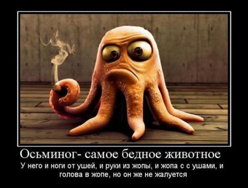 http://www.anekdotov-mnogo.ru/image-prikol/smeshnie_kartinki_133766881022052012.jpg