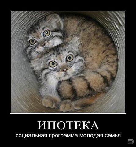 http://www.anekdotov-mnogo.ru/image-prikol/smeshnie_kartinki_133766881622052012.jpg