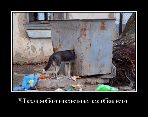 http://www.anekdotov-mnogo.ru/image-prikol/smeshnie_kartinki_133797668926052012.jpg