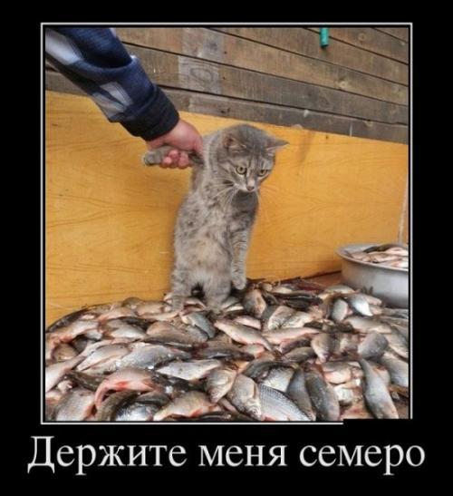 http://www.anekdotov-mnogo.ru/image-prikol/smeshnie_kartinki_133828286529052012.jpg