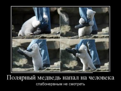 http://www.anekdotov-mnogo.ru/image-prikol/smeshnie_kartinki_133830539729052012.jpg