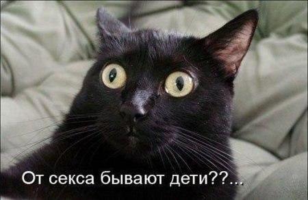http://www.anekdotov-mnogo.ru/image-prikol/smeshnie_kartinki_133905477507062012.jpg
