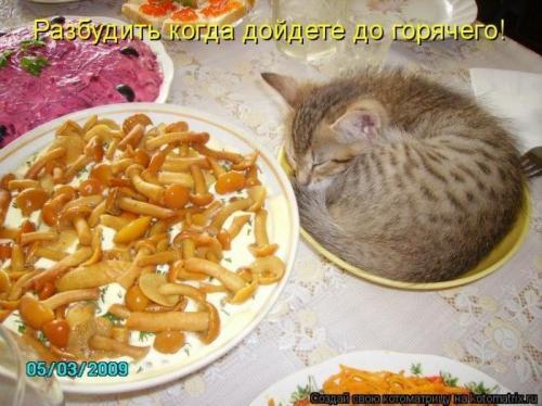 http://www.anekdotov-mnogo.ru/image-prikol/smeshnie_kartinki_133905483507062012.jpg