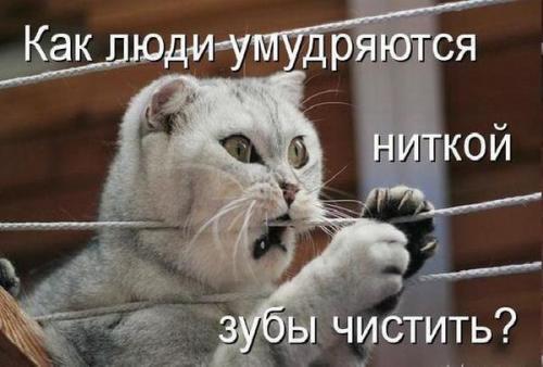 http://www.anekdotov-mnogo.ru/image-prikol/smeshnie_kartinki_133905484707062012.jpg
