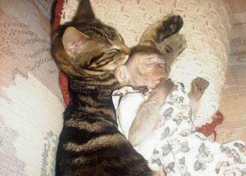 http://www.anekdotov-mnogo.ru/image-prikol/smeshnie_kartinki_133935146410062012.jpg
