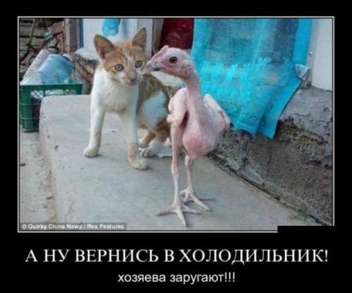 http://www.anekdotov-mnogo.ru/image-prikol/smeshnie_kartinki_133939130011062012.jpg