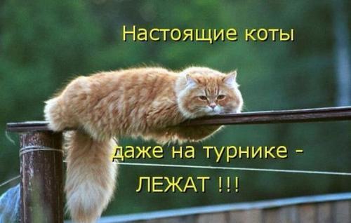 http://www.anekdotov-mnogo.ru/image-prikol/smeshnie_kartinki_133939131611062012.jpg