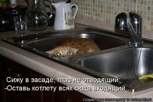 http://www.anekdotov-mnogo.ru/image-prikol/smeshnie_kartinki_133939669611062012.jpg