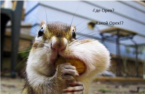 http://www.anekdotov-mnogo.ru/image-prikol/smeshnie_kartinki_133982455116062012.jpg