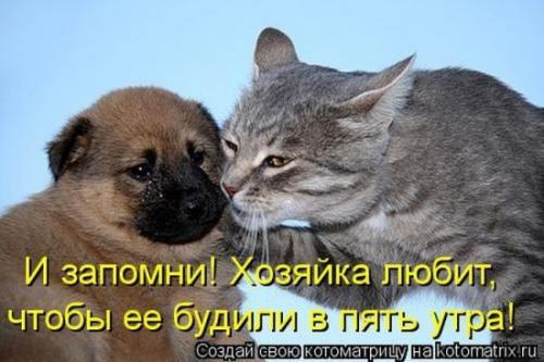http://www.anekdotov-mnogo.ru/image-prikol/smeshnie_kartinki_133983341516062012.jpg