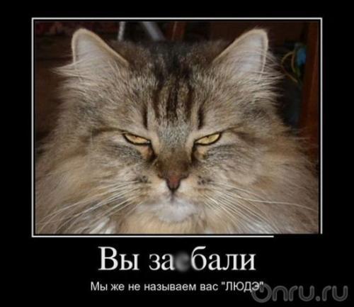 http://www.anekdotov-mnogo.ru/image-prikol/smeshnie_kartinki_134011611319062012.jpg