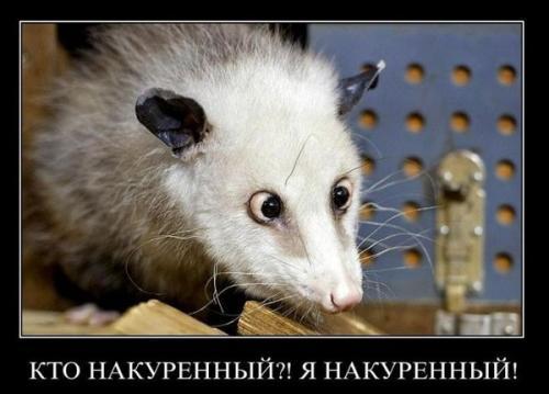 http://www.anekdotov-mnogo.ru/image-prikol/smeshnie_kartinki_134046737123062012.jpg