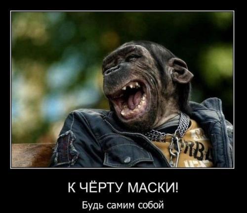 http://www.anekdotov-mnogo.ru/image-prikol/smeshnie_kartinki_134046757823062012.jpg