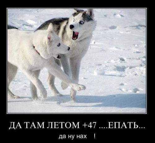 http://www.anekdotov-mnogo.ru/image-prikol/smeshnie_kartinki_134046777923062012.jpg