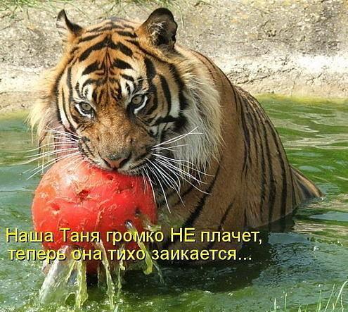 http://www.anekdotov-mnogo.ru/image-prikol/smeshnie_kartinki_134098481029062012.jpg