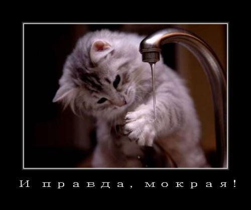 http://www.anekdotov-mnogo.ru/image-prikol/smeshnie_kartinki_134142742204072012.jpg