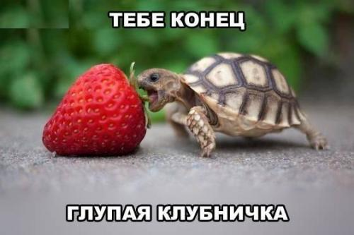 http://www.anekdotov-mnogo.ru/image-prikol/smeshnie_kartinki_134264801519072012.jpg