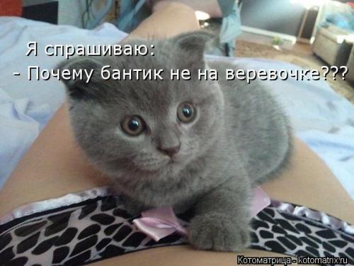 http://www.anekdotov-mnogo.ru/image-prikol/smeshnie_kartinki_134271954419072012.jpg