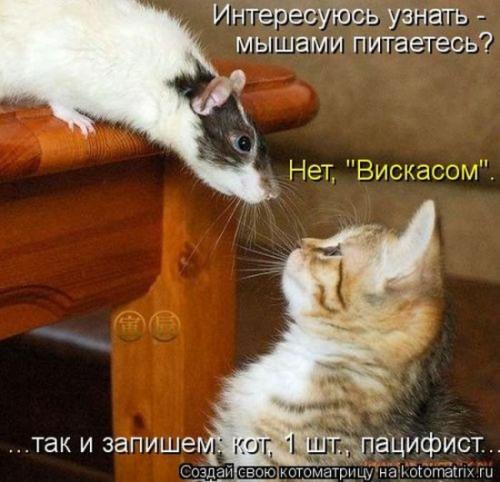 http://www.anekdotov-mnogo.ru/image-prikol/smeshnie_kartinki_134290199722072012.jpg