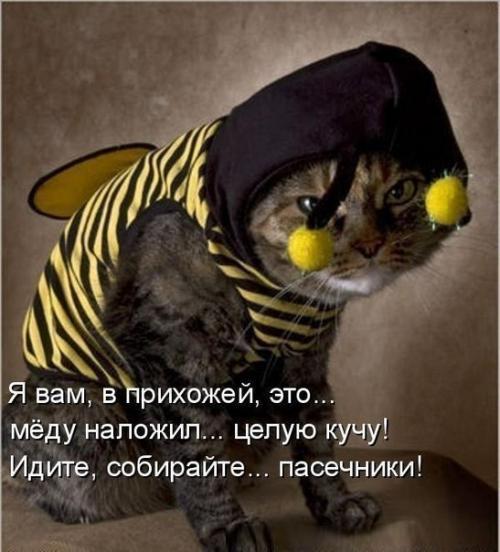http://www.anekdotov-mnogo.ru/image-prikol/smeshnie_kartinki_134324064925072012.jpg