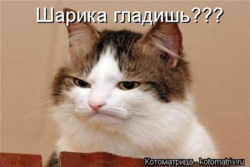 http://www.anekdotov-mnogo.ru/image-prikol/smeshnie_kartinki_134359169829072012.jpg