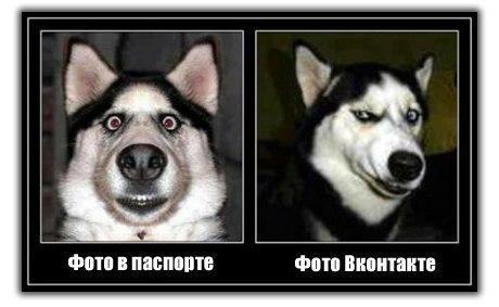 http://www.anekdotov-mnogo.ru/image-prikol/smeshnie_kartinki_134376424831072012.jpg