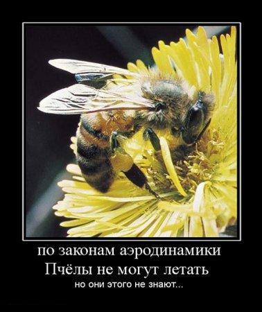http://www.anekdotov-mnogo.ru/image-prikol/smeshnie_kartinki_134383118201082012.jpg