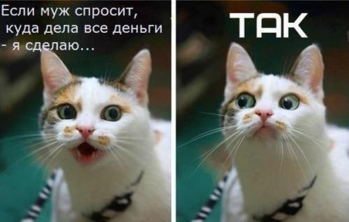 http://www.anekdotov-mnogo.ru/image-prikol/smeshnie_kartinki_134436534607082012.jpg