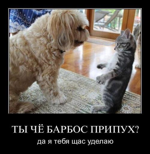 http://www.anekdotov-mnogo.ru/image-prikol/smeshnie_kartinki_134436839707082012.jpg