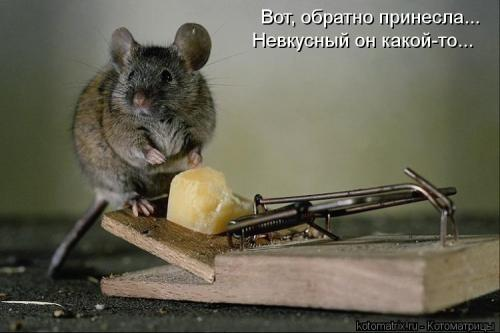 http://www.anekdotov-mnogo.ru/image-prikol/smeshnie_kartinki_134453939509082012.jpg
