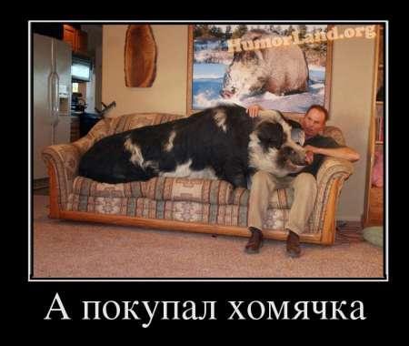 http://www.anekdotov-mnogo.ru/image-prikol/smeshnie_kartinki_134480447913082012.jpg
