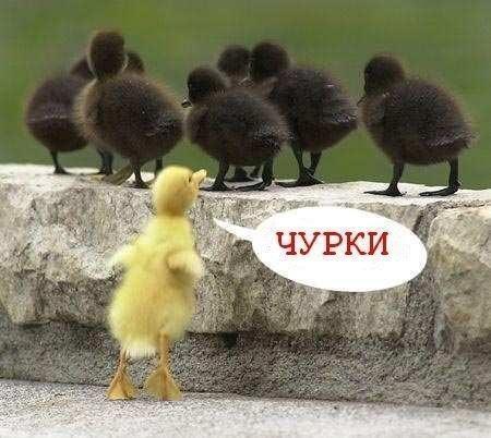 http://www.anekdotov-mnogo.ru/image-prikol/smeshnie_kartinki_134502529415082012.jpg