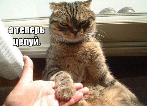http://www.anekdotov-mnogo.ru/image-prikol/smeshnie_kartinki_134502564815082012.jpg