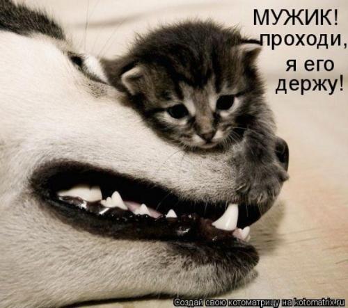 http://www.anekdotov-mnogo.ru/image-prikol/smeshnie_kartinki_134549817121082012.jpg