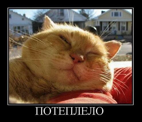 http://www.anekdotov-mnogo.ru/image-prikol/smeshnie_kartinki_134649381101092012.jpg