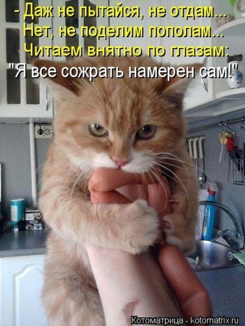 http://www.anekdotov-mnogo.ru/image-prikol/smeshnie_kartinki_134659519002092012.jpg