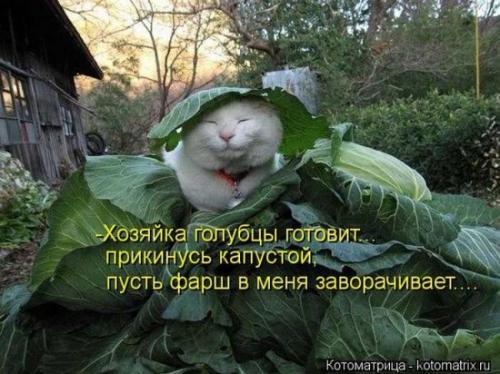 http://www.anekdotov-mnogo.ru/image-prikol/smeshnie_kartinki_134659520902092012.jpg