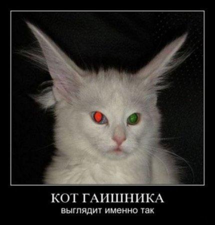 http://www.anekdotov-mnogo.ru/image-prikol/smeshnie_kartinki_134662193803092012.jpg