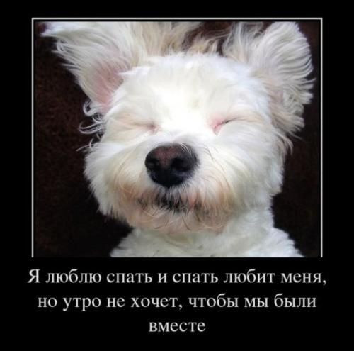 http://www.anekdotov-mnogo.ru/image-prikol/smeshnie_kartinki_134789103717092012.jpg