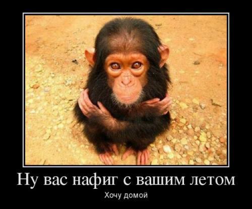 http://www.anekdotov-mnogo.ru/image-prikol/smeshnie_kartinki_1348166172200920122548.jpg