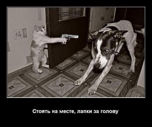 http://www.anekdotov-mnogo.ru/image-prikol/smeshnie_kartinki_1348258951220920122021.jpg