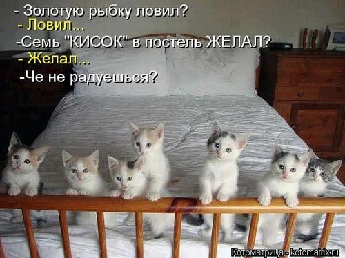 http://www.anekdotov-mnogo.ru/image-prikol/smeshnie_kartinki_134825895122092012478.jpg