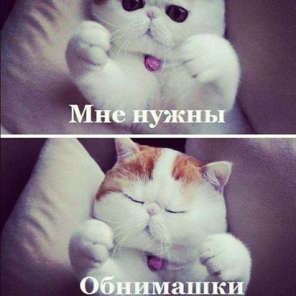 http://www.anekdotov-mnogo.ru/image-prikol/smeshnie_kartinki_1348425550230920121942.jpg