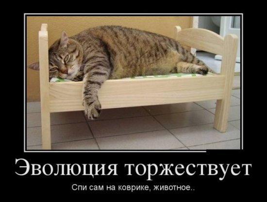 http://www.anekdotov-mnogo.ru/image-prikol/smeshnie_kartinki_1348425550230920122866.jpg