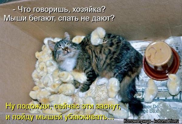 http://www.anekdotov-mnogo.ru/image-prikol/smeshnie_kartinki_1348591297250920121370.jpg