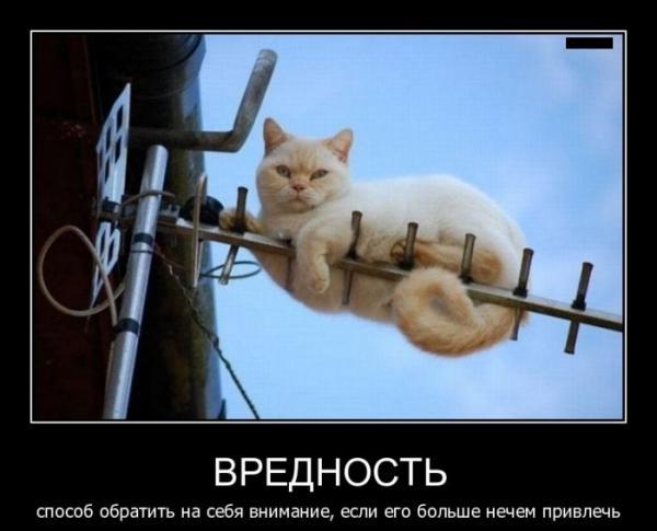 http://www.anekdotov-mnogo.ru/image-prikol/smeshnie_kartinki_1348678786260920122893.jpg