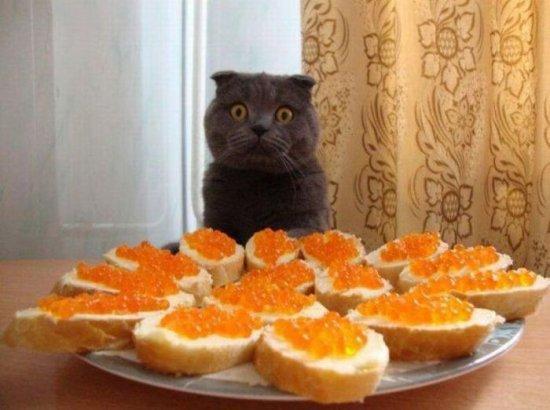 http://www.anekdotov-mnogo.ru/image-prikol/smeshnie_kartinki_134868748126092012675.jpg