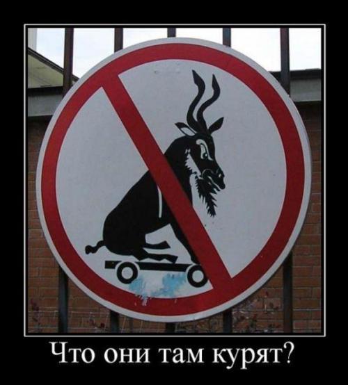 http://www.anekdotov-mnogo.ru/image-prikol/smeshnie_kartinki_134899474230092012.jpg