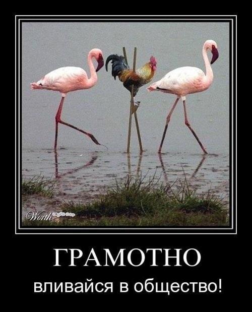http://www.anekdotov-mnogo.ru/image-prikol/smeshnie_kartinki_1349027297300920121716.jpg